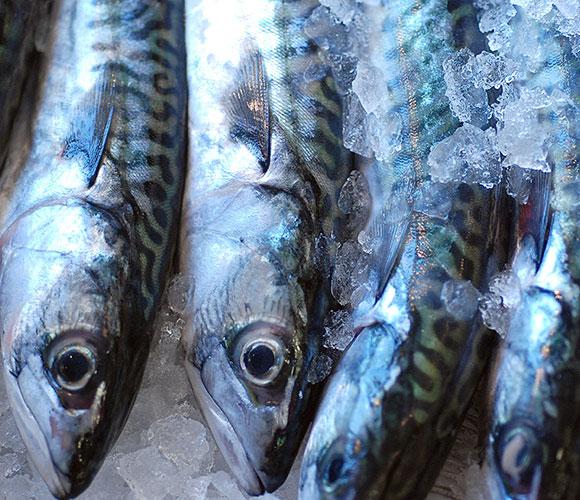 New Wave Fish